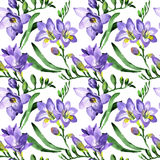 Wildflower fresia flower pattern in a watercolor style. Royalty Free Stock Photography
