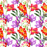 Wildflower fresia flower pattern in a watercolor style. Stock Image