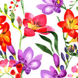 Wildflower fresia flower pattern in a watercolor style. Royalty Free Stock Images