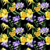 Wildflower fresia flower pattern in a watercolor style. Royalty Free Stock Photo
