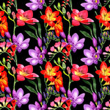 Wildflower fresia flower pattern in a watercolor style. Stock Photography