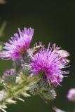 Wildflower in the garden Royalty Free Stock Photos