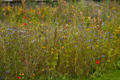 Wildflower garden Royalty Free Stock Photography
