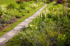 Wildflower garden and path royalty free stock photos
