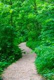 Wildflower-Garten-Fußweg Stockfoto
