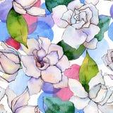 Wildflower gerbera flower pattern in a watercolor style. Stock Images