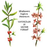 Wildflower Stock Image