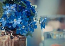 Błękitni wildflowers w wazowym (Hepatica) Zdjęcia Royalty Free