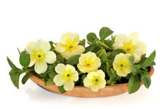 Wildflower and Herb Leaf Salad. Spring primrose flowers, lettuce and mint herb salad in an olive wood bowl, isolated over white background stock photo