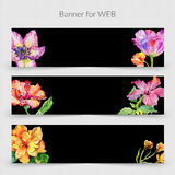 Wildflower hibiscus flower banner in a watercolor style isolated. Stock Image