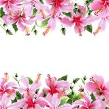 Wildflower hibiscus pink flower frame in a watercolor style. royalty free illustration