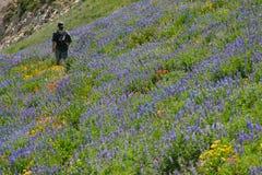 Wildflower hiker Royalty Free Stock Photo