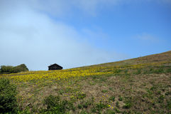 Wildflower hill barn Royalty Free Stock Photography