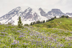 Wildflower Hillside in Paradise Stock Photo