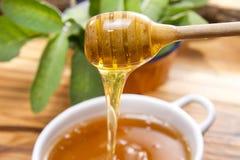 Wildflower honey Stock Image