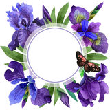 Wildflower iris flower frame in a watercolor style isolated. Stock Photos