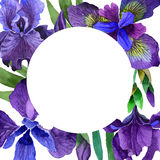 Wildflower iris flower frame in a watercolor style isolated. Royalty Free Stock Image