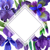 Wildflower iris flower frame in a watercolor style isolated. Royalty Free Stock Photos