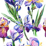Wildflower iris flower pattern in a watercolor style. Royalty Free Stock Photos