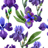 Wildflower iris flower pattern in a watercolor style isolated. vector illustration