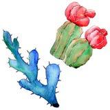 Wildflower kaktus w akwarela stylu odizolowywającym Fotografia Royalty Free