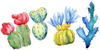 Wildflower kaktus w akwarela stylu odizolowywającym Zdjęcia Royalty Free
