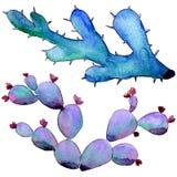 Wildflower kaktus w akwarela stylu odizolowywającym Obrazy Stock