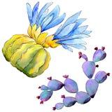 Wildflower kaktus w akwarela stylu odizolowywającym Obrazy Royalty Free