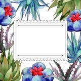 Wildflower kaktusa rama w akwarela stylu Fotografia Stock