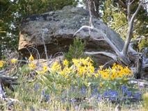 Wildflower krajobraz Obraz Stock