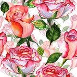 Wildflower kwiatu różany wzór w akwarela stylu odizolowywającym Zdjęcia Royalty Free