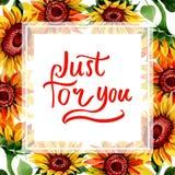 Wildflower kwiatu słonecznikowa rama w akwarela stylu Zdjęcia Royalty Free