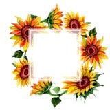 Wildflower kwiatu słonecznikowa rama w akwarela stylu Zdjęcie Royalty Free
