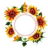 Wildflower kwiatu słonecznikowa rama w akwarela stylu Obrazy Stock