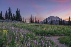 Wildflower kwitnienie przy Tipsoo jeziorem, Mt dżdżysty Fotografia Stock