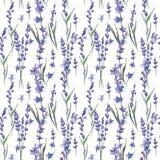 Wildflower lavander flower pattern in a watercolor style. Wildflower lavander flower pattern  in a watercolor style. Full name of the plant: lavander. Aquarelle Stock Image