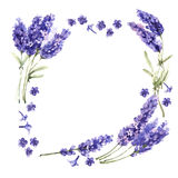 Wildflower lavender flower frame in a watercolor style isolated. Stock Photos