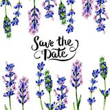 Wildflower lavender flower frame in a watercolor style. Royalty Free Stock Photos