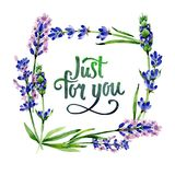 Wildflower lavender flower frame in a watercolor style. Stock Images