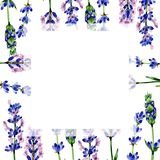 Wildflower lavender flower frame in a watercolor style. Stock Photos