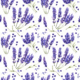 Wildflower lavender flower pattern in a watercolor style isolated. Royalty Free Stock Photo
