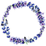 Wildflower lavender flower wreath in a watercolor style. Full name of the plant: lavender. Aquarelle wild flower for background, texture, wrapper pattern Royalty Free Stock Photo