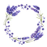 Wildflower lavender flower wreath in a watercolor style isolated. Full name of the plant: lavender. Aquarelle wild flower for background, texture, wrapper Royalty Free Stock Photos