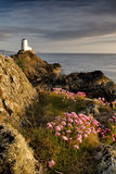 Wildflower Lighthouse, Ynys Llanddwyn, Anglesey. Sping eveing on at the tip of Ynys Llanddwyn (also known as Lovers Island), a tidal island just of the coast of Stock Photos