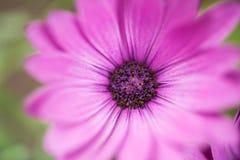 Wildflower luminoso Immagine Stock