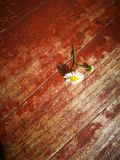Wildflower and magnolia flower lying on wooden board Royalty Free Stock Image