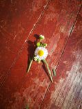 Wildflower and magnolia flower lying on wooden board Stock Images