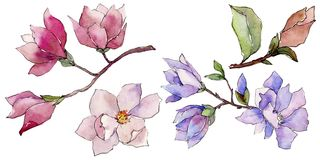 Wildflower magnolia flower in a watercolor style isolated. Full name of the plant: magnolia. Aquarelle wild flower for background, texture, wrapper pattern Stock Photo