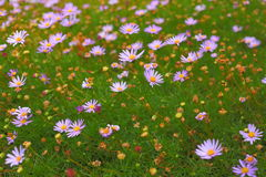 Wildflower meadow background Royalty Free Stock Image