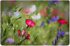 Wildflower meadow background Stock Image